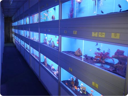3 Tier DIY Installation from extrusions @ Aylesford Aquatics, Kent