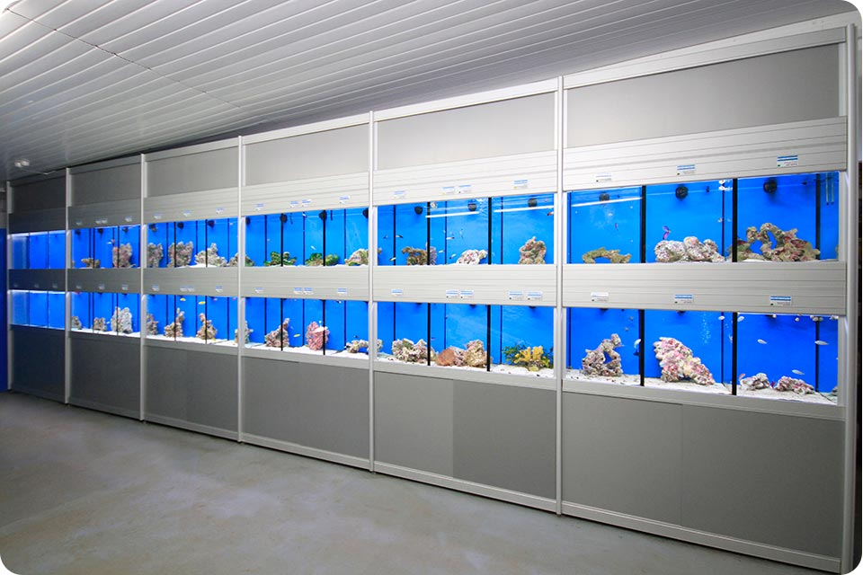 Multitier aquarium systems aquatic shop fittings for Fish aquarium stores