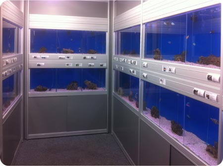 2 Tier installation within alcove by Hobby Fish @ Three Shires Aquatics, Stoke on Trent, Staffordshire.